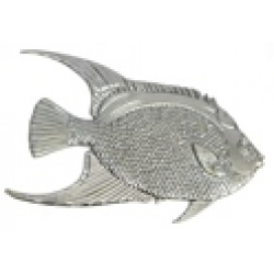 Queen Angel Fish *CLEARANCE ITEM* (SOLD OUT)